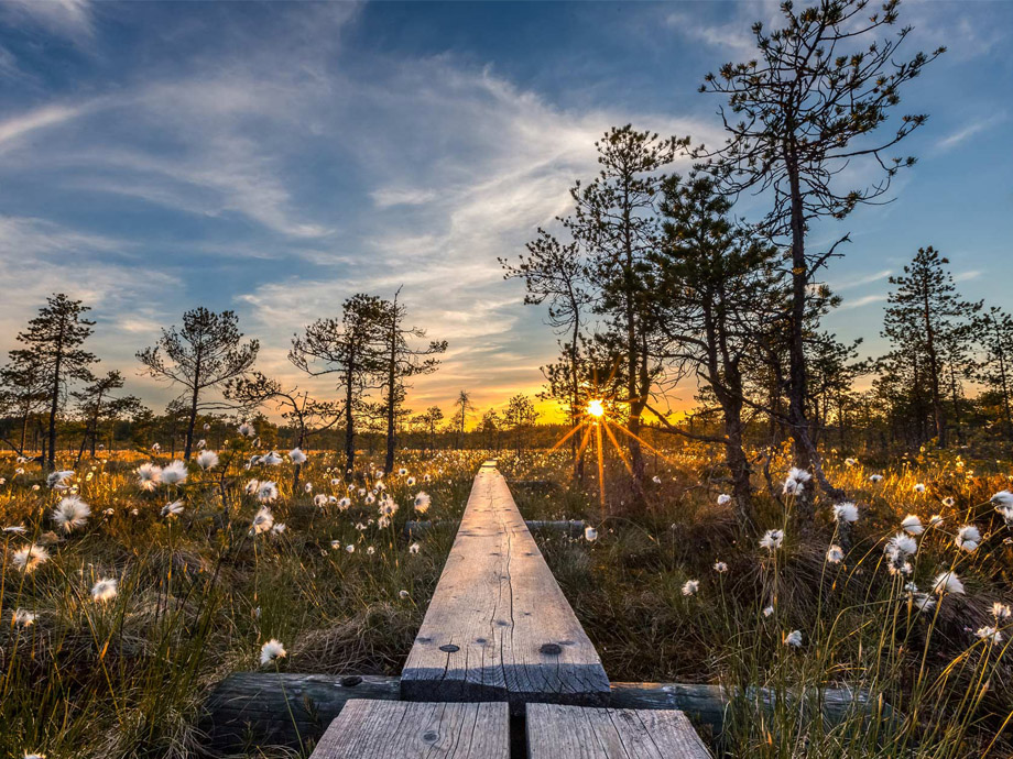 Get_Inspired_article-ossi_nature_path[1]_920x690