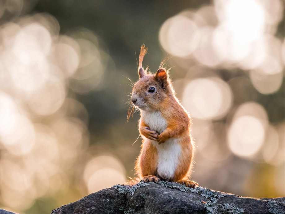 Get_Inspired_image_ossi_nature_socials_squirrel_920x690