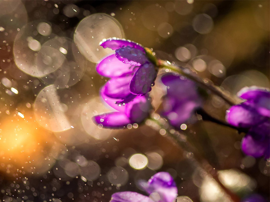 Get_Inspired_article-ossi_nature_purple_flowers[1]_920x690